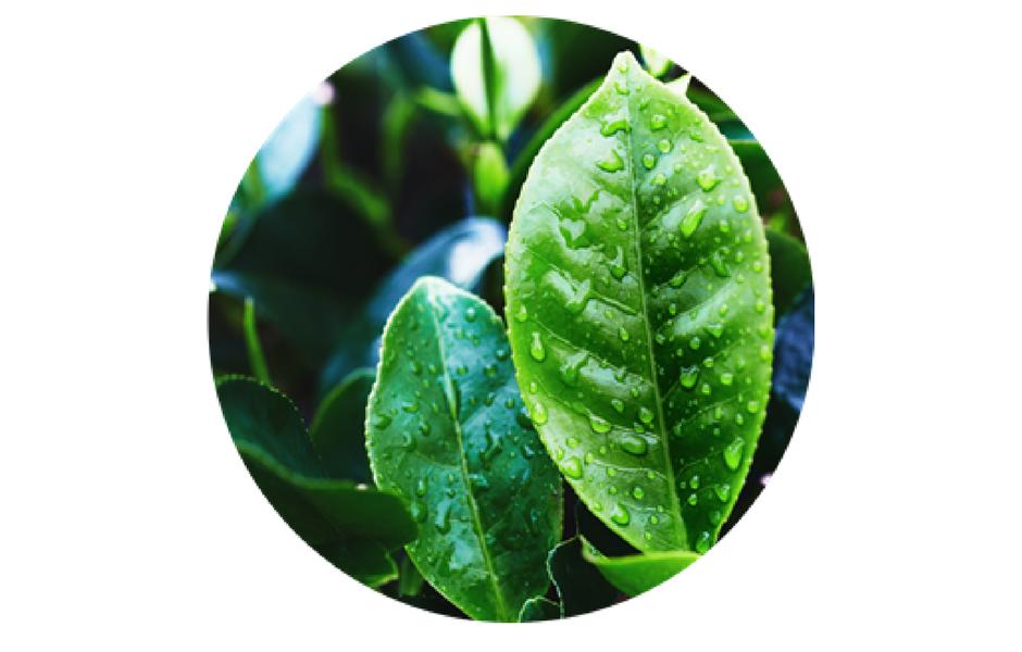 Te verde revitalizante